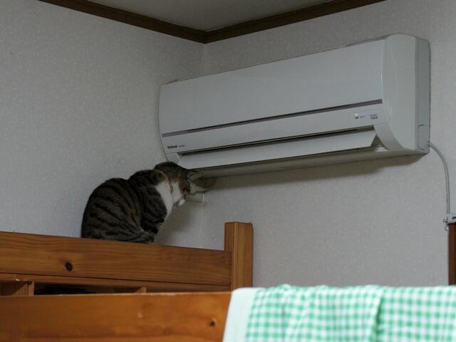 heater_animal (10)