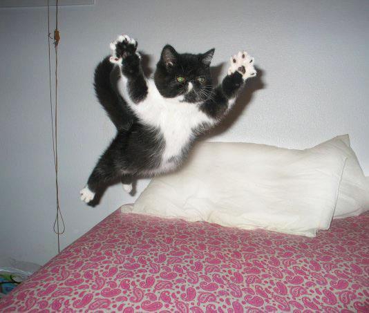 othercat (14)
