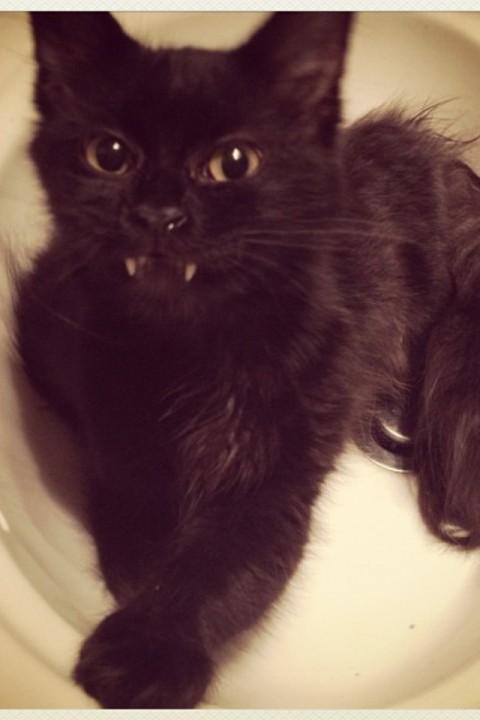 othercat (19)