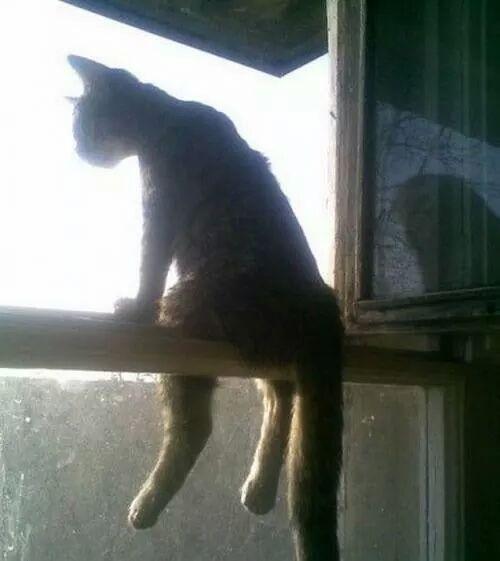 othercat (3)