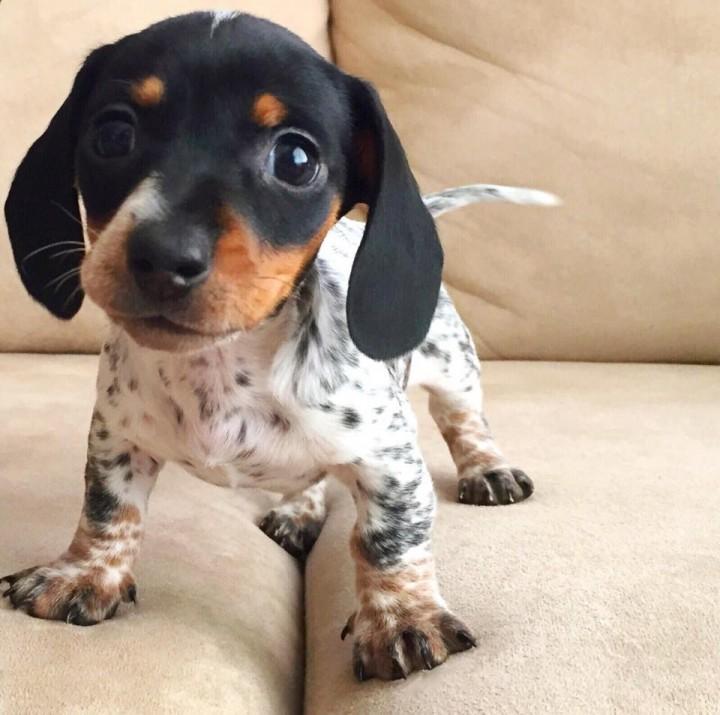 speakabledog (12)