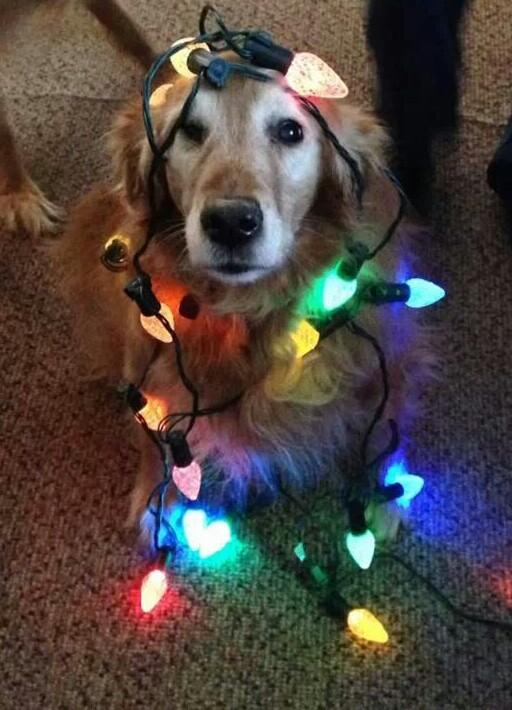 speakabledog (14)