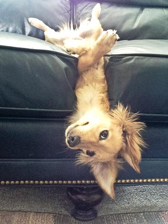 speakabledog (8)