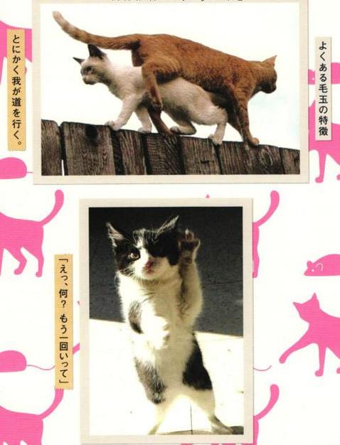takarajimacat15