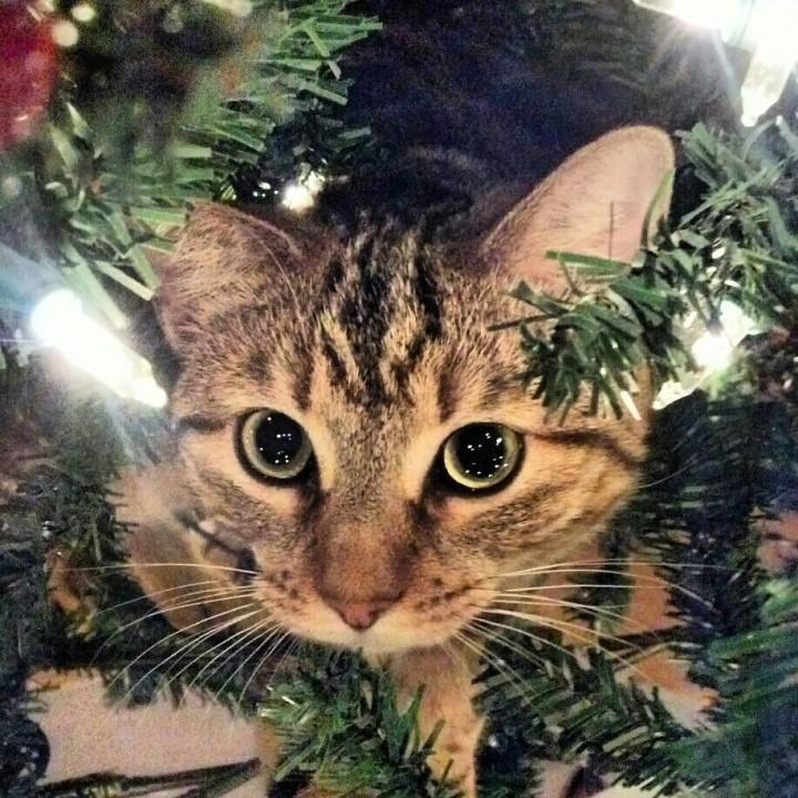 xmas_cat (4)