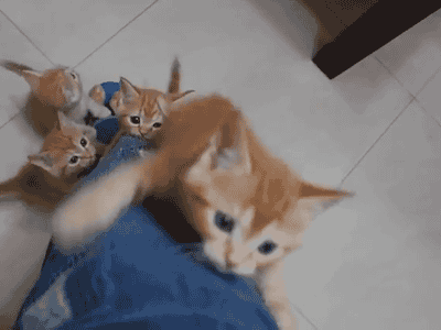 cat_happen (1)