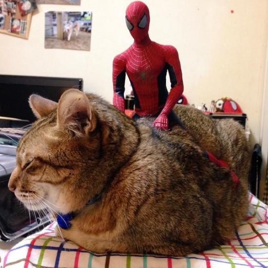 cat_happen (13)