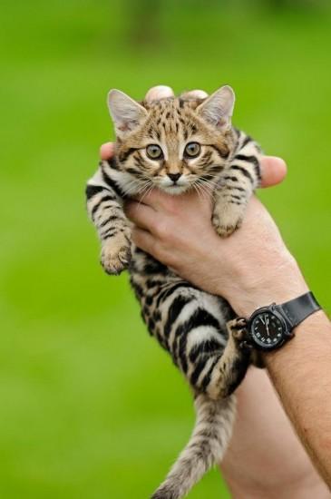 cat_happen (8)