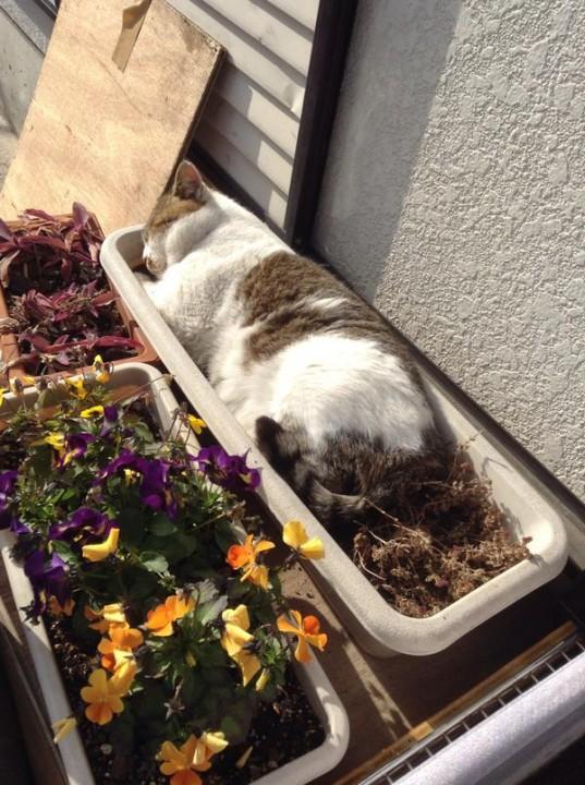 flowercat2