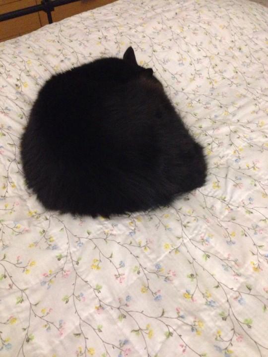 heartwarming_CAT (13)