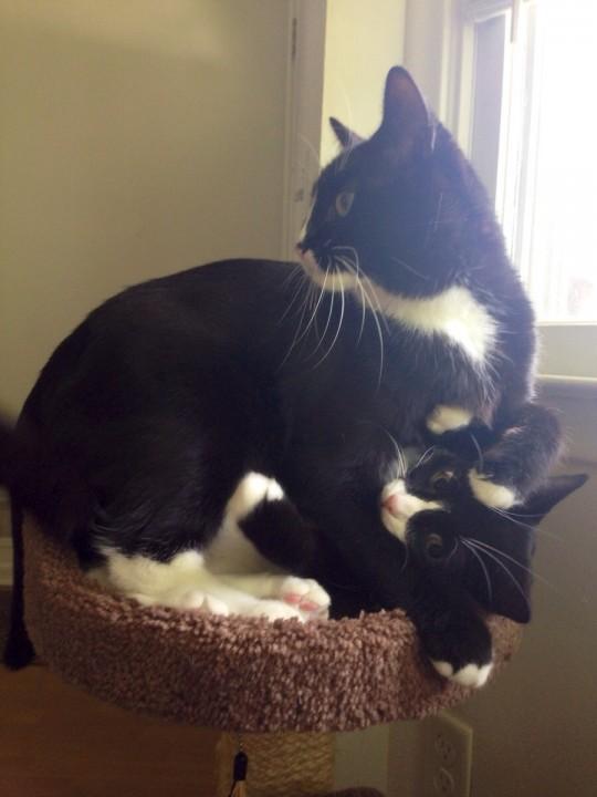 heartwarming_CAT (14)