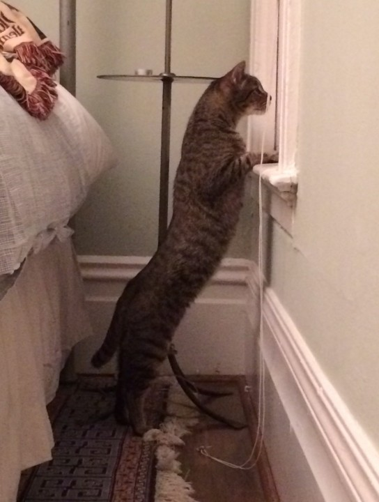 heartwarming_CAT (15)