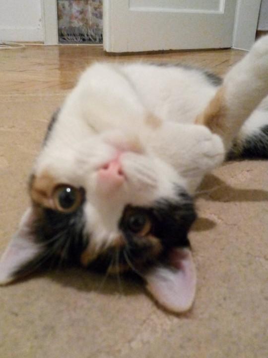 heartwarming_CAT (3)