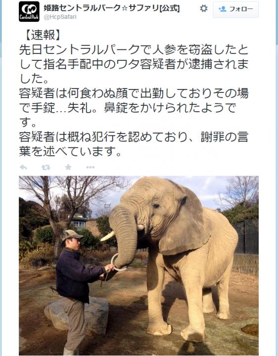 himeji_elephant3