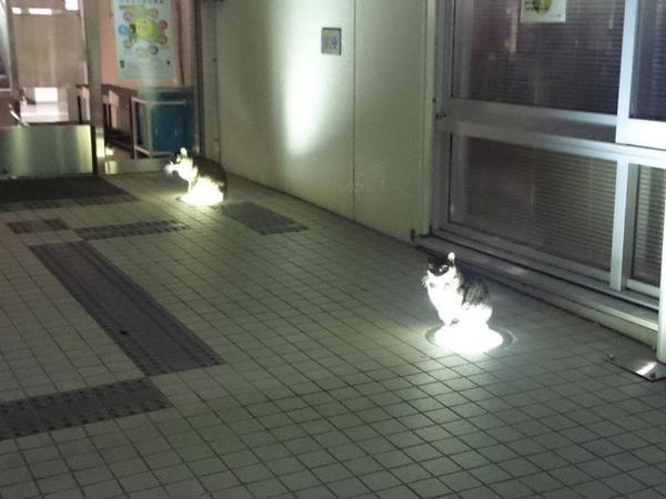 lightcat1