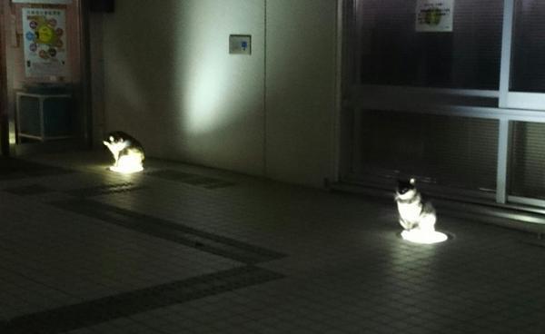 lightcat2