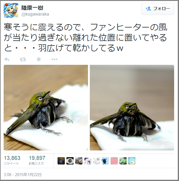 mejiro_hogo (2)