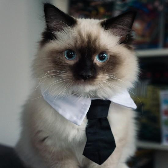 workingcat (14)