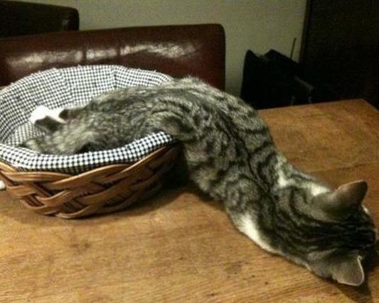 cat_february (1)