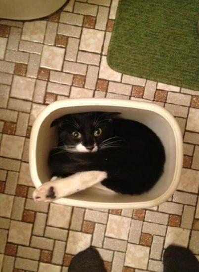 cat_february (2)