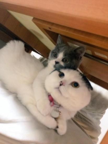 cat_february (6)