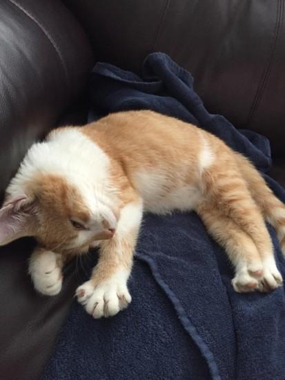 cat_february (7)
