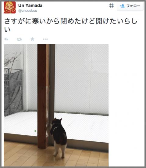 neko_yuki2