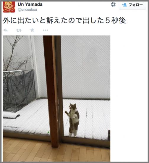neko_yuki5