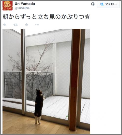 neko_yuki6