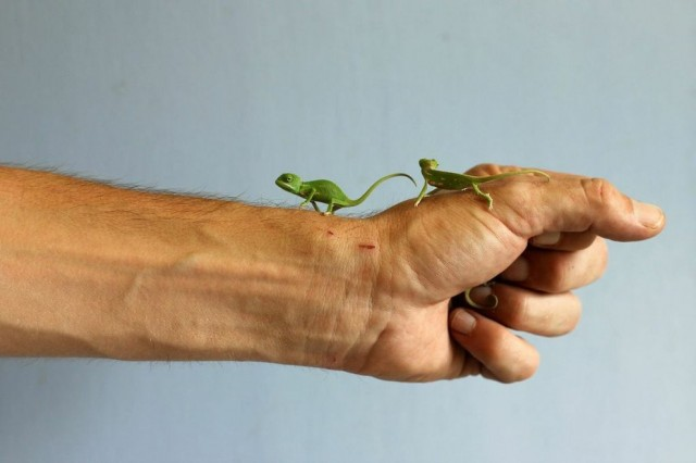 chameleonBABY (6)