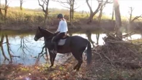 horse_river1