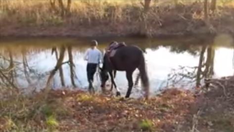 horse_river3
