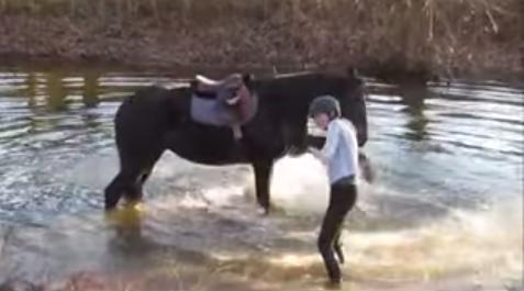 horse_river6