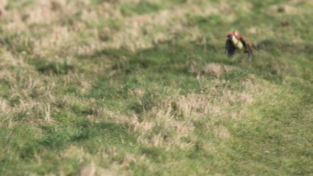 woodpecker_itati (3)