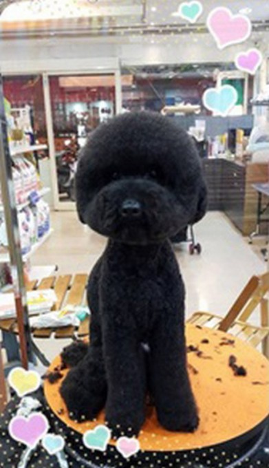 Round-Poodle