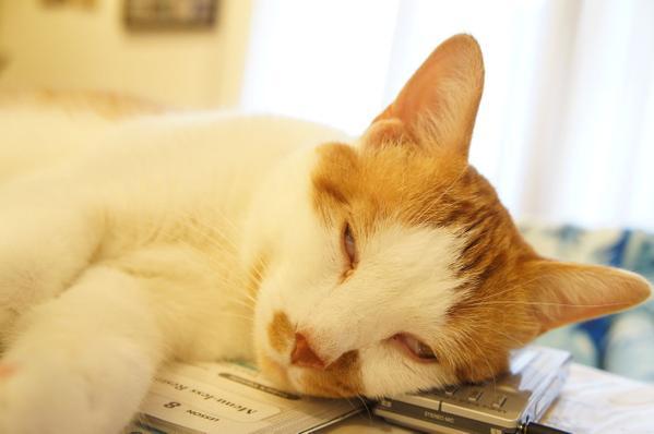 cat_saikyo (11)
