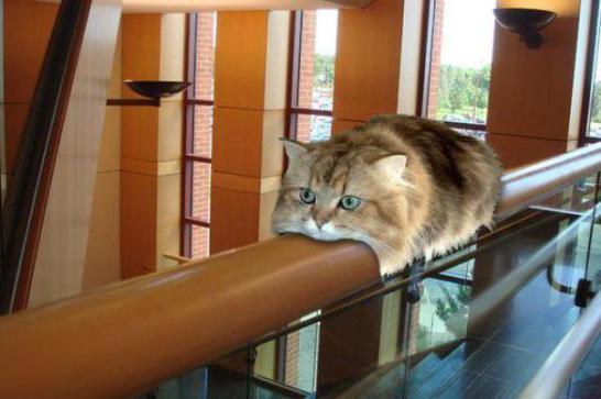 cat_saikyo (6)