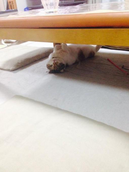kotatucat (2)