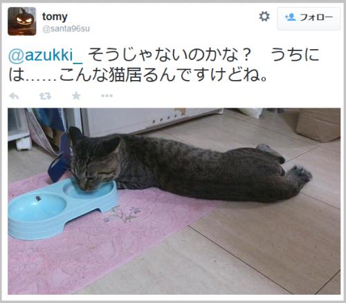 lioncat4