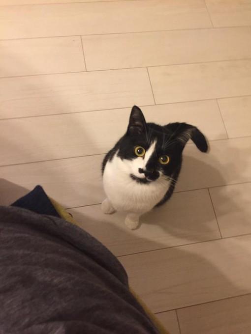 cat_ton (1)