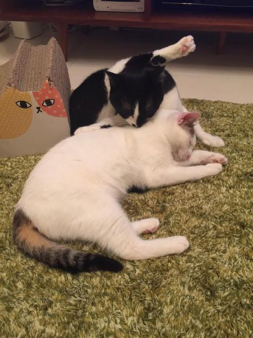 cat_tonchan (3)