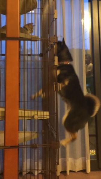 catanddog (7)