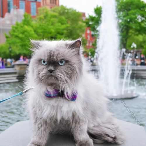 catlife (16)