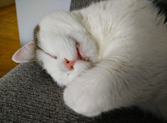 catlife (17)
