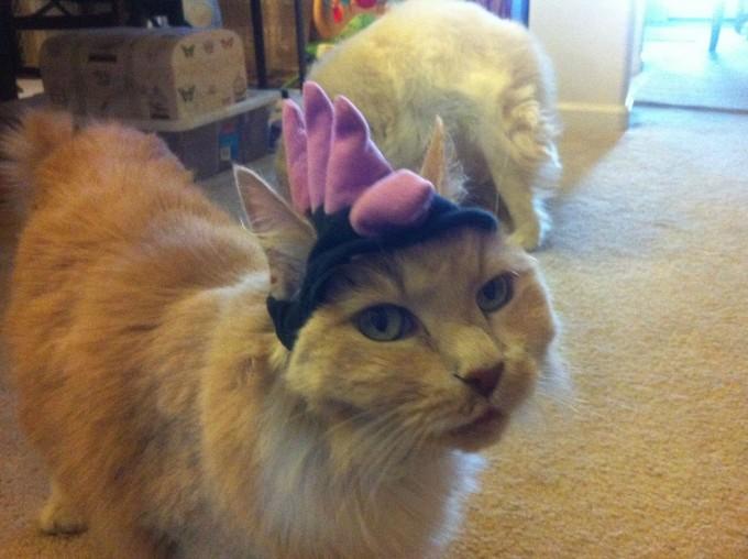 catlife (18)