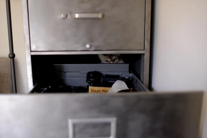 catlife (20)