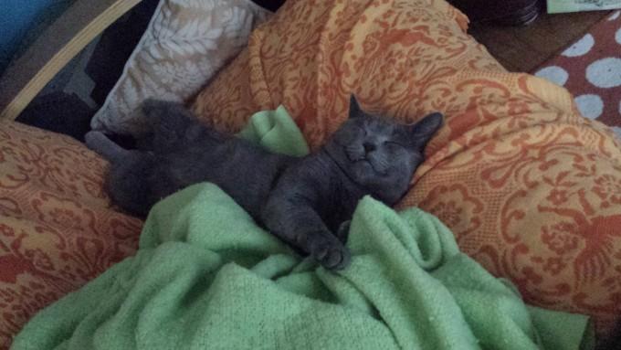 catlife (4)