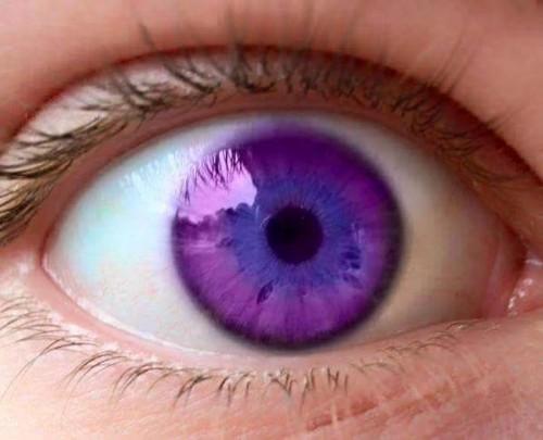 purpleeye (1)