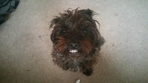 speakabledog (10)
