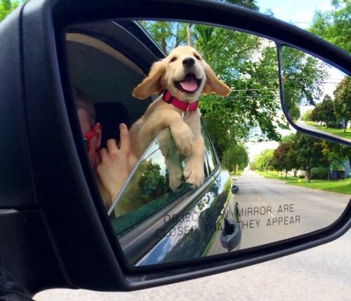 speakabledog (15)